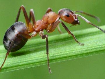 hormigas - insectos - insectos beneficiosos - hormigas - foto. Un insecto en el suelo.