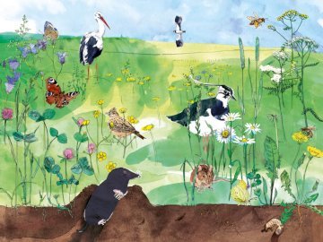 Prairie en mai - May Meadow - puzzles montrant une illustration de la prairie et de ses habitants.