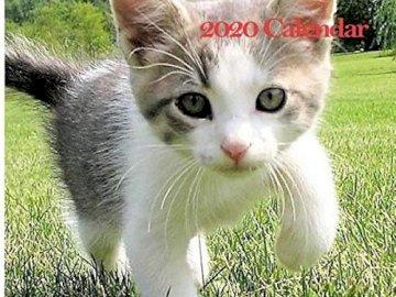 Un micio carino - Questo è un gattino carino e spero che ti piaccia. È così carino e spero che ti piaccia. Un gatto
