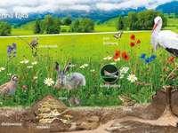 En el prado - Animales y plantas que viven en el prado. Una bandada de pájaros sentado encima de un campo cubiert