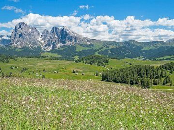 Alps with a sunny day - Beautiful mountain meadow in the Alps. A large green field with a mountain in the background.