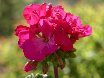 ALEXIS # _V ° 25 - BLUME BLUME 2516958265255250502250. Eine Nahaufnahme einer Blume.