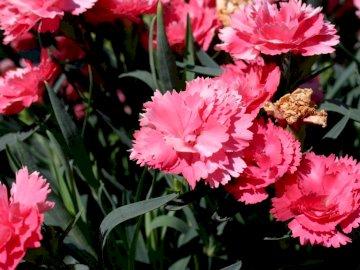 ALEXIS # _V ° 25 - FLOWER super FLOWER super FLOWER super FLOWER super. A vase filled with pink flowers.