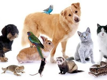 pets for children - use in class of pets, children can guess which animals are. A cat sitting next to a dog.