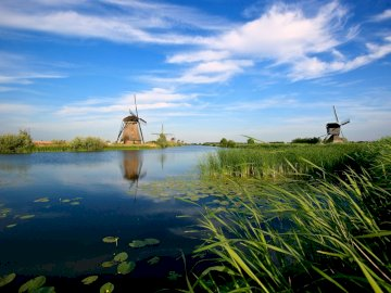 holland_mills_river_vegetation - holland_mills_river_vegetation. Zbiornik wodny