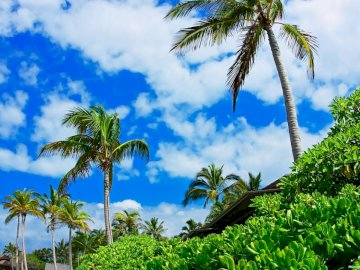 palm_trees_sky_clouds_brightly - palm_trees_sky_clouds_brightly. Grupa palm obok drzewa.