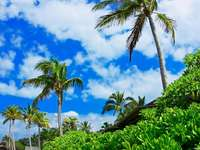 palm_trees_sky_clouds_brightly