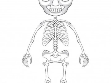 SKELETON PUZZLE - Learn how to place the bones of the skeleton.