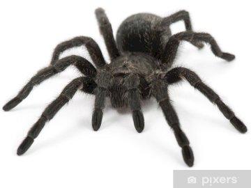pająk, zwierzęta, łąka, maj - pająk, zwierzęta, łąka, maj. Pająk na białej powierzchni.