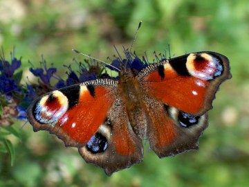 motyl, łąka, zwierzęta, maj - motyl, łąka, zwierzęta, maj. Owad na gałęzi.