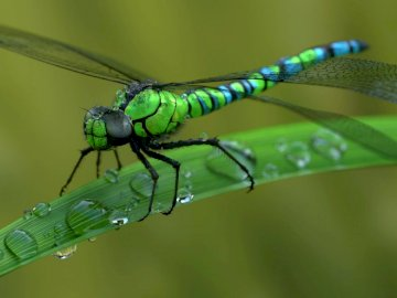 Dragonfly, animals, meadow, may - Dragonfly, animals, meadow, may. A close up of a green leaf.
