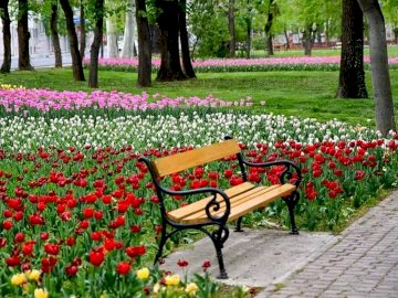 Park landscape. - Park. A bench among flowers. An empty park bench sitting in the middle of a flower garden.