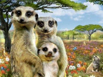 Suricatas - Puzzle. Tres suricatas.