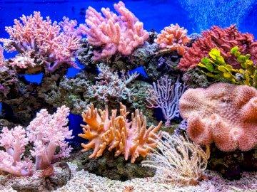 Corallo, animali - Coralli vivi. Ho Chi Minh City. Vista subacquea di un corallo.
