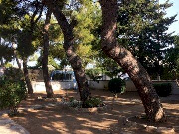 albero .. - Alberi E Altalena ..... Un albero in un parco.