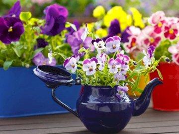 Kolorowe Bratki W Pojemnikach - Kolorowe Bratki W Kolorowych Pojemnikach. Wazon wypełniony fioletowymi kwiatami.