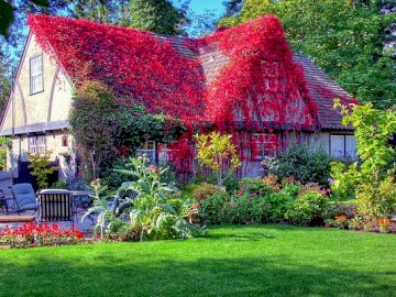 House overgrown with ivy - House Overgrown With Ivy In A Garden. A colorful flower garden in front of a house.