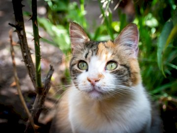 Mirada de un gato tierno - White and brown cat on brown tree branch. A cat that is looking at the camera.