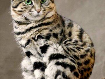 chat - animal de compagnie - chat-animal-puzzle. Un chat assis au sommet d'un mur de pierre.