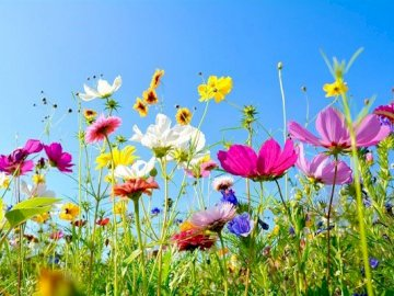 Flower meadow - Spring meadow, covered with flowers. A group of colorful flowers in a field. Meadow representing dif