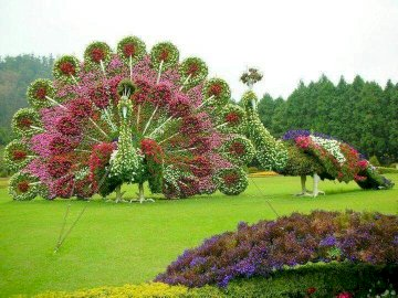 panorama - beautiful decoration in the open air. A close up of a flower garden.