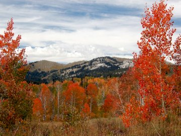 Colorado autumn views - mountains, colorado, trees, autumn, america, fall landscape, leaves. A tree with a mountain in the b
