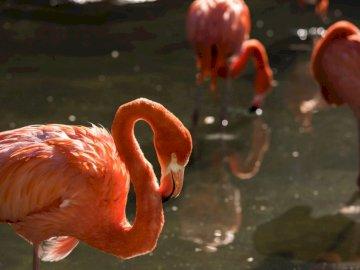 Schöner Flamenco in Temaiken - Rosa Flamingos auf Wasser während des Tages. Ein Flamingo im Wasser.