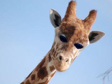 jakby wyglądały zwierzęta gdyby mały oczy z przodu - как биха изглеждали животните, ако малките очи отпред