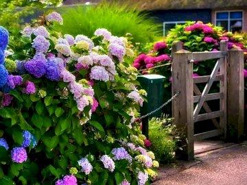 panorama - dom za kwiecistym parawanem. Grupa purpurowe kwiaty w ogrodzie.