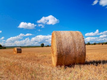 pleasant landscape - landscape of hay bales and the sky. A field full of hay.