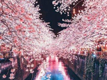 Kwitnąca wiśnia w Japonii - Krajobraz z Japonii, kwitnąca wiśnia.