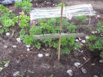 Petersilie - Petersilie im Garten auf einem Teller signiert. Eine Nahaufnahme eines Blumengartens.