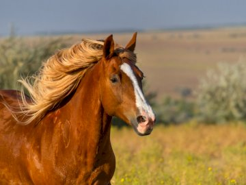 beautiful horse - beautiful horse in the nature. A close up of a brown horse standing on top of a field.