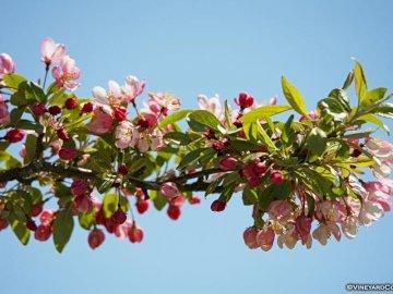 Zweig der Blumen - Ein Zweig der Blumen mit einem blauen Himmelhintergrund. Eine Nahaufnahme einer Blume.