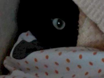 Chi mi troverà? - Fai una foto del mio gattino.
