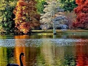 Park Autumn. - Jigsaw puzzle. Landscape. Park Autumn. A body of water surrounded by trees.