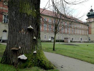 Parc du château de Łańcut - arbre, plaque tournante, château, Łańcut. Un grand arbre dans un parc.