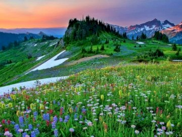 Spring In The Mountains - Spring In The Mountains, Flowers On The Meadow. A large green field with a mountain in the backgroun