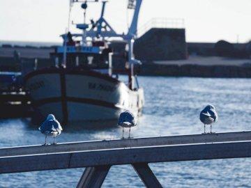 Möwe reden - Drei Möwenvögel auf Post-Viewing-Boot. Nantes, Frankreich. Ein Mann, der auf einem Dock neben eine
