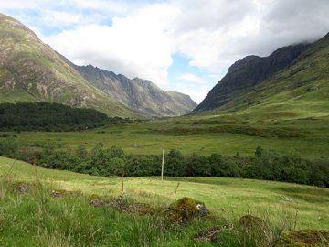 Scotland, Glen Coe - Scotland, Glen Coe. A herd of cattle grazing on a lush green field.