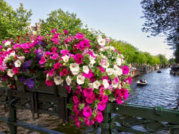 Canal - water - beautiful flowers on the bridge. A pink flower in a river.