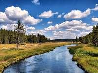 river_coast_trees_wood_