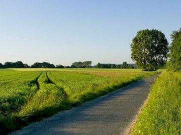 road_field_greens_traces_asphalt - road_field_greens_traces_asphalt_. A long road with grass on the side of a lush green field.