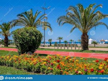 Bellissima passeggiata di Batumi - Batumi - bellissima passeggiata. Una stretta di un giardino fiorito di fronte a una palma.
