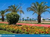 Batumi-piekna promenada - Batumi-piękna promenada. Zakończenie up kwiatu ogród przed drzewkiem palmowym.