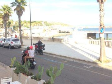 Puglia .. - Puglia in una giornata di sole. Un gruppo di palme sul lato di una strada.
