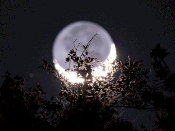 Jeśli pobierzesz i użyjesz tego - Zdjęcie księżyca. Portoryko. Choinka zapalona w nocy.