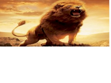 image of a lion - This picture is of a lion picture.