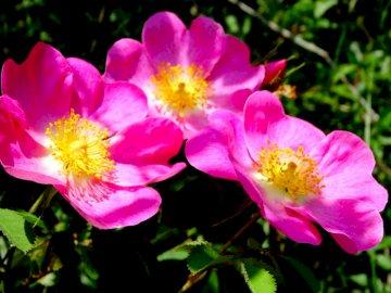 Flowers ... - Flowers ..................... Closed flower.