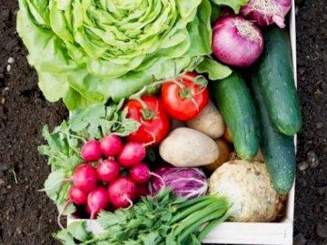 Sănătatea din legume - Sănătatea din legume. Un montón de diferentes tipos de verduras.